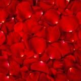 Хлопушка пневматическая (лепестки роз)-600мм